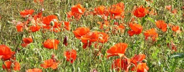 Armistice Day Service – 11th November